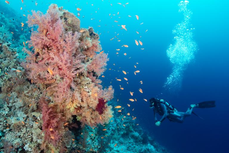 Tauchsafari-Rotes-Meer