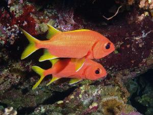 Fische Rotes Meer