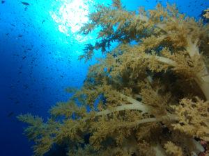 Coralgarden