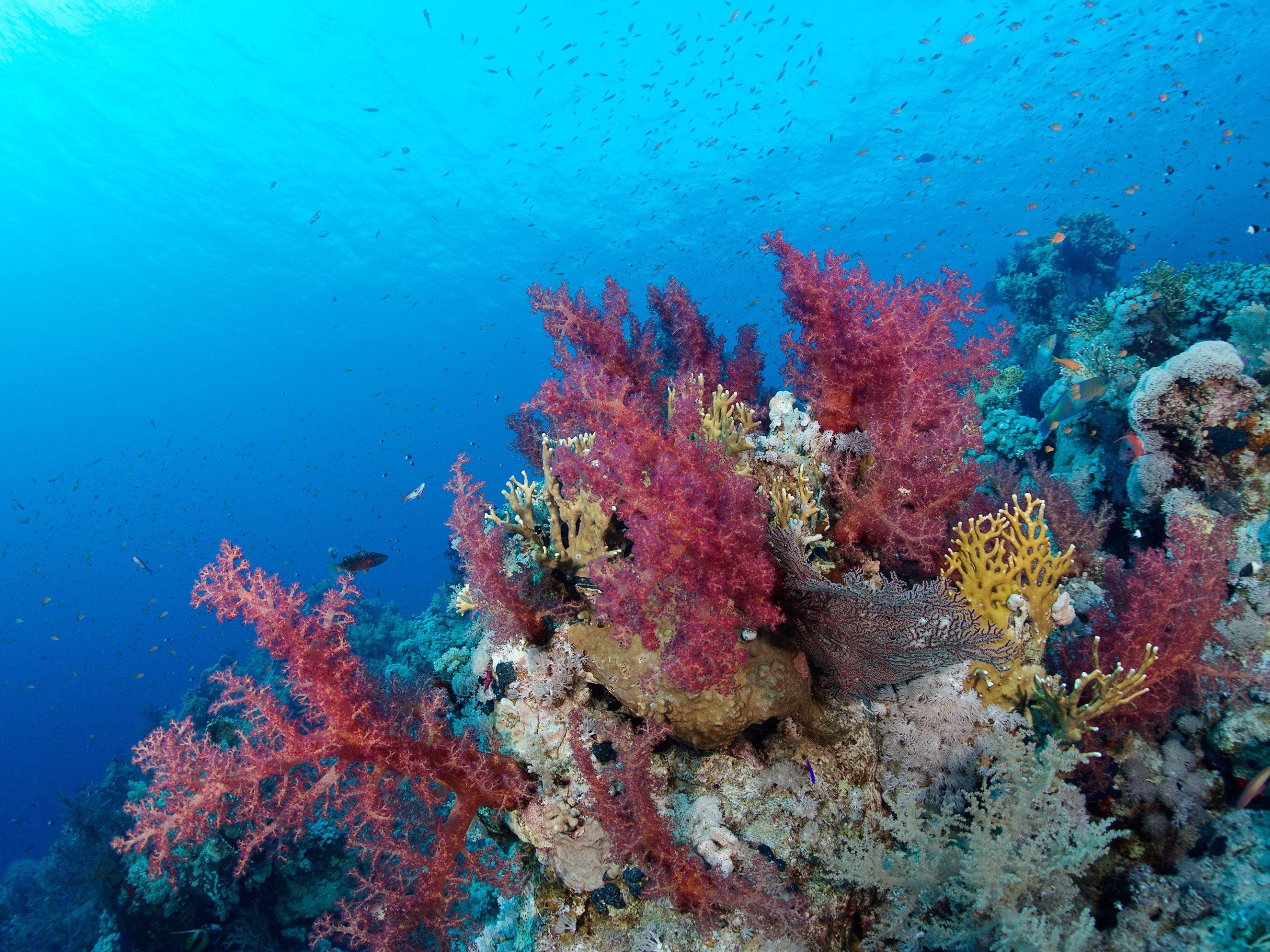 Riff Korallen