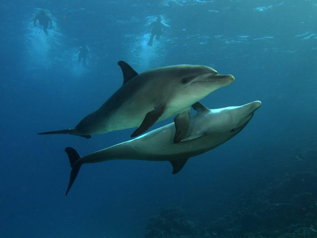 Wissenswertes vom Roten Meer: Die Woche
