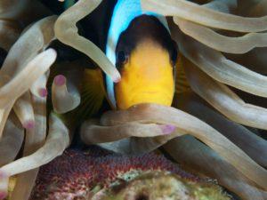 Nemo-Unterwasser