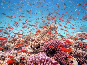 Unterwasser-Hurghada