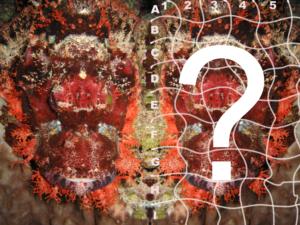 Unterwasser-Rotes-Meer