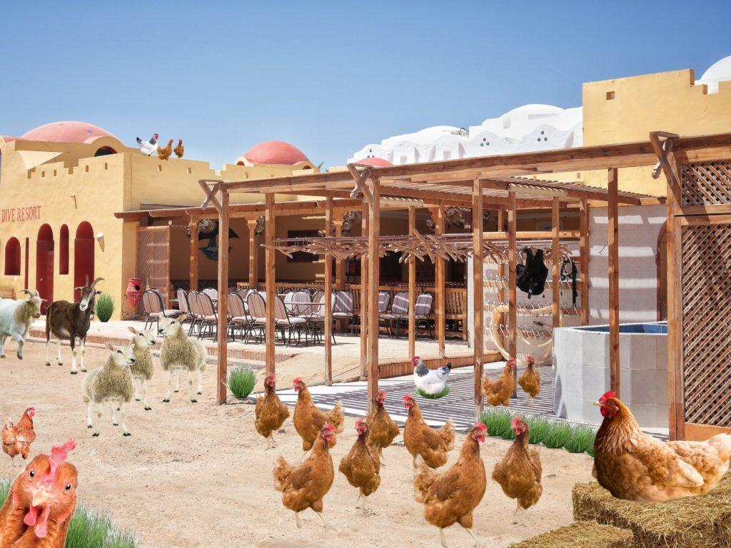 Lebenshof-Hurghada