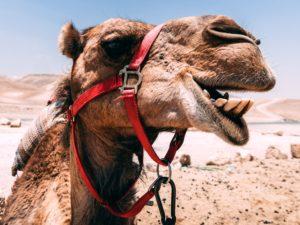 Kamel Wochenrückblick