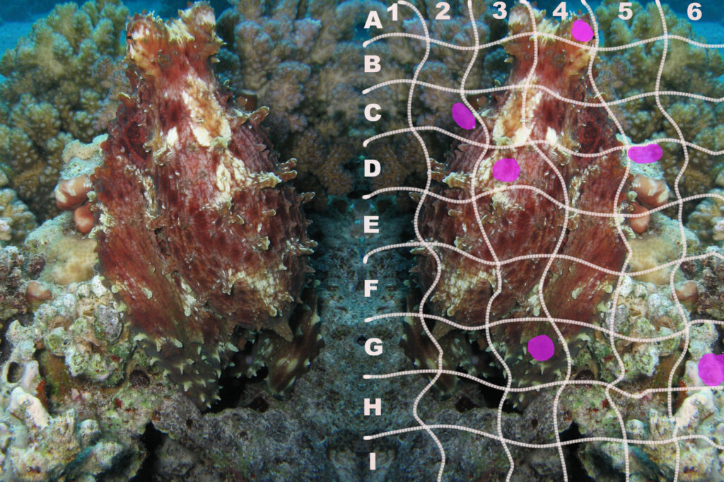 Oktopus Quiz