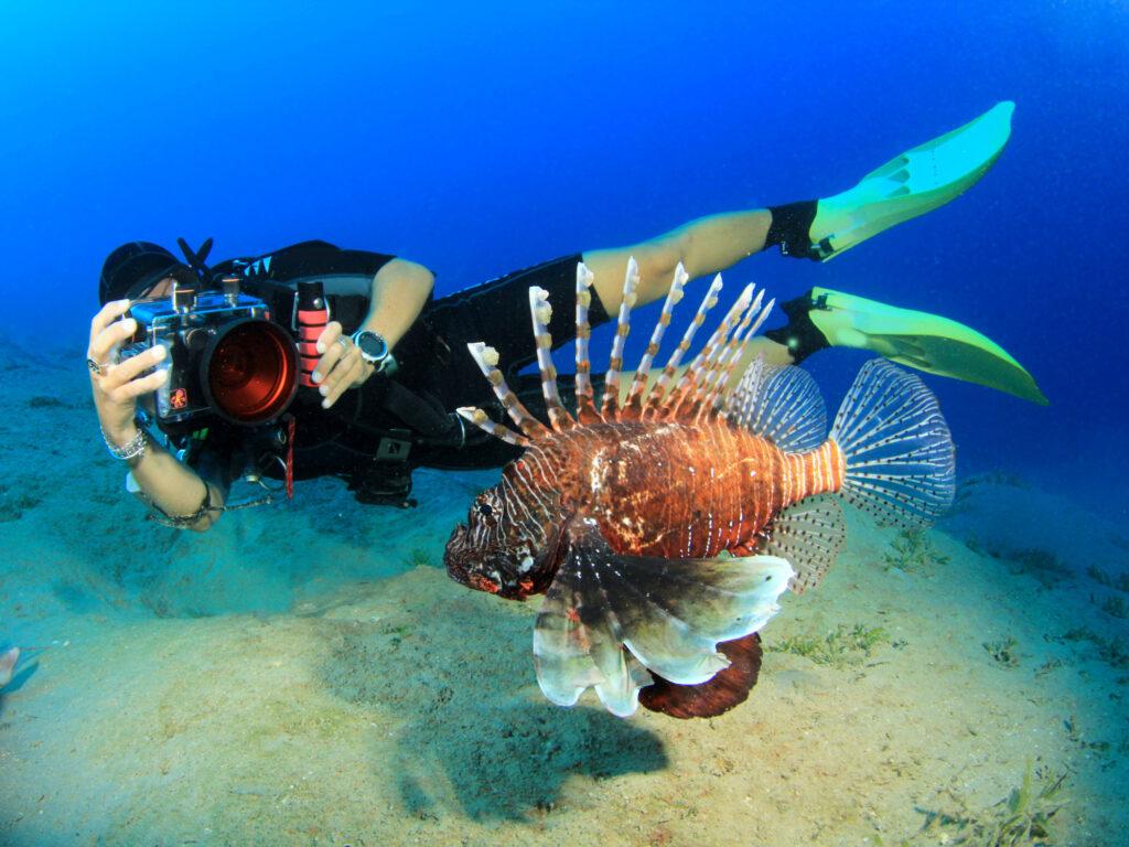 Taucher Rotfeuerfisch