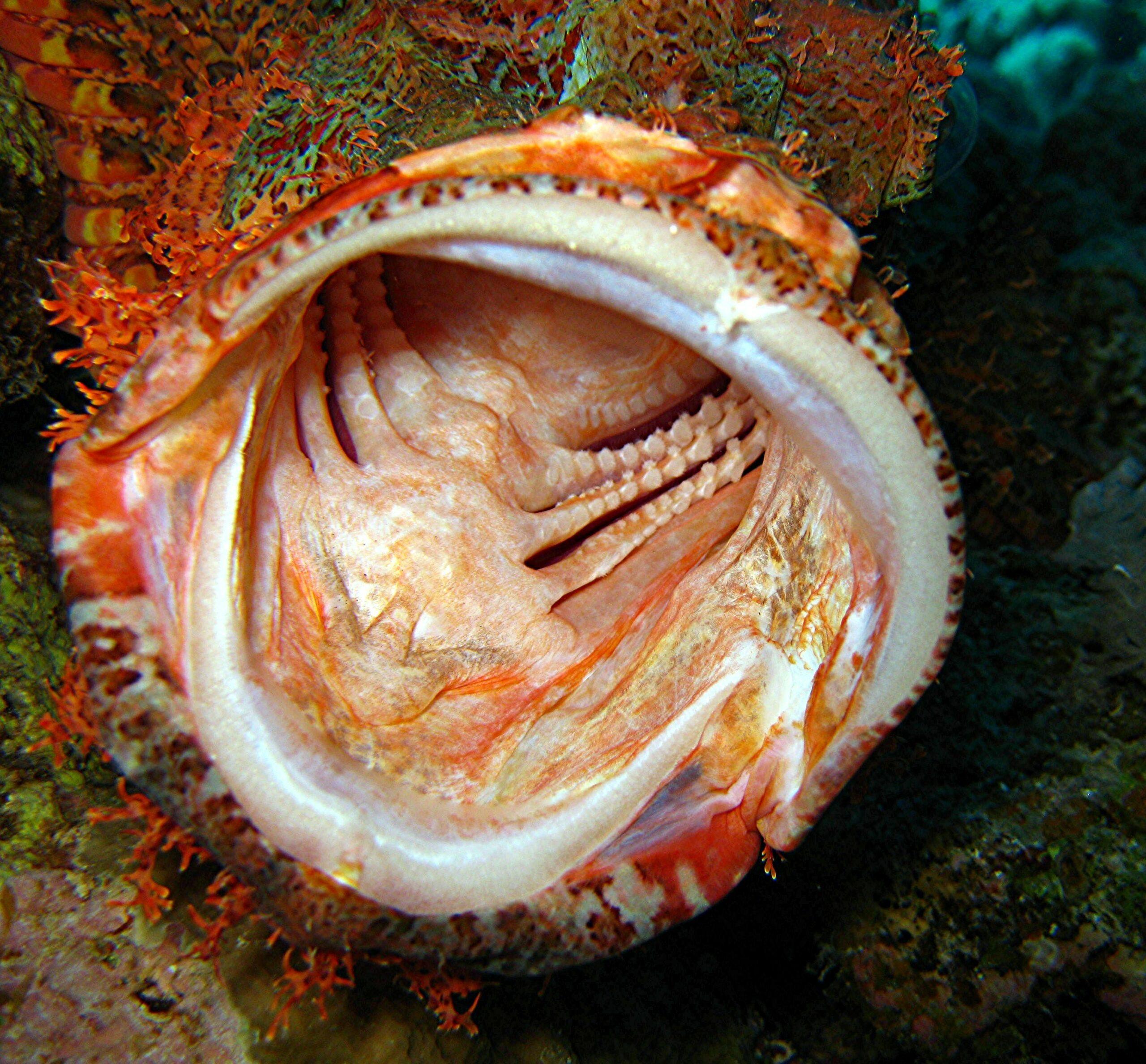 Unterwasser Nahaufnahmen