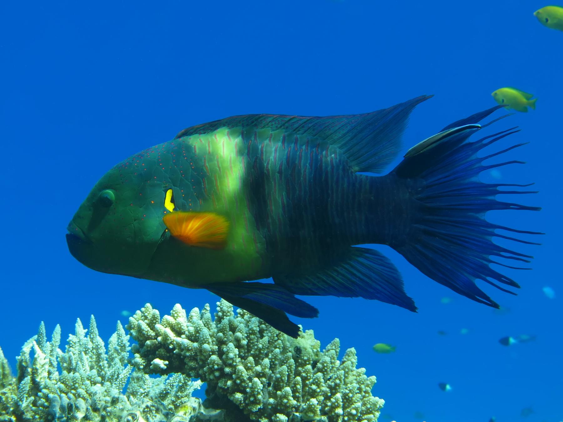 Fische gucken im Vorbeifliegen