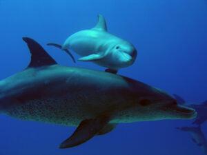 Neugierige Delfine gaben sich heute die Ehre
