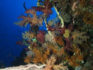 Kleine Korallenkunde am Riff