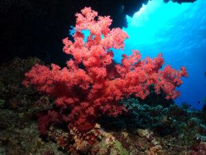 Herrliche Unterwasserwelt am Panorama Riff