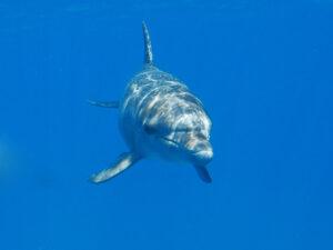 Delfine, Manta und Hai - ein Wahnsinnstag!